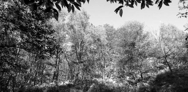 Paysages de Bois et Forêts
